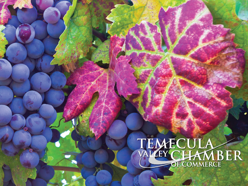 Temecula-Chamber-Logo-with-Background